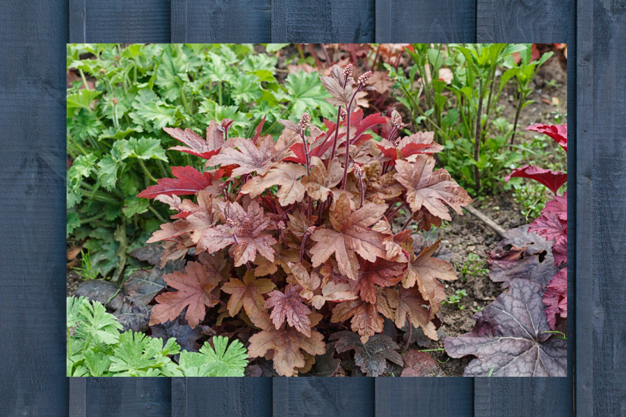 6 PERENNIALS FOR YOUR SHADE GARDEN. A list of beautiful perennials that will not only love the shade but will also add texture and color to your gardens.