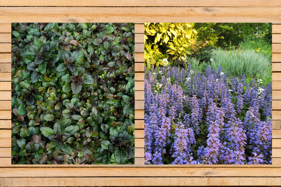 5 PERENNIAL GROUND COVERS FOR YOUR GARDEN. A list of colorful groundcovers for your yard that will go perfectly in a planter, over a wall, or in a flowerbed.