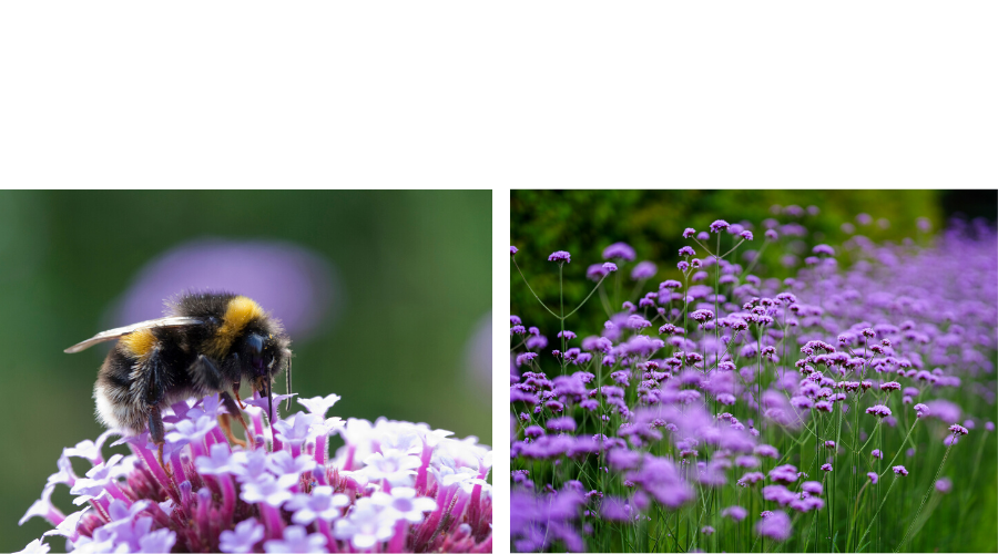 ATTRACT BEES WITH THESE 10 FLOWERS. A list of flowers to plant in your garden that will attract an array of pollinators especially bees.