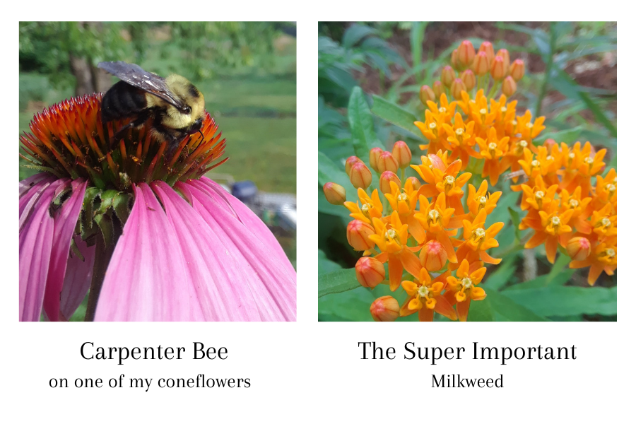 5 Fall gardening tips to help pollinators. By adopting a few friendly ways to be in the garden, we can really help to take care of our butterflies and bees, just to name a few.